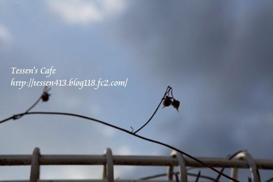 IMG_0081 - コピー