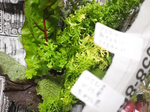 鎌倉野菜3
