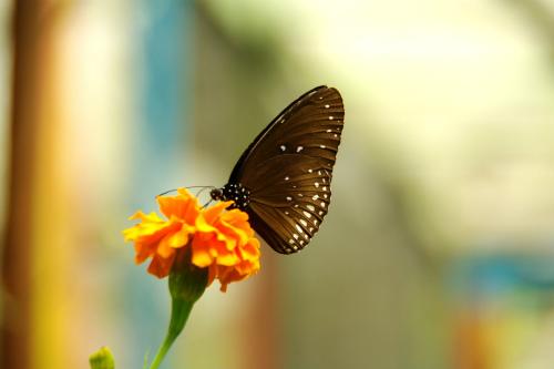 butterfly garden バタフライガーデン
