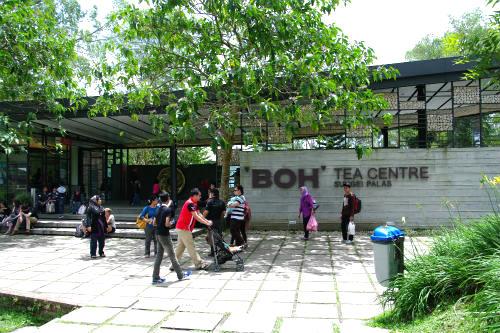 BOH TEA ボーティー農園