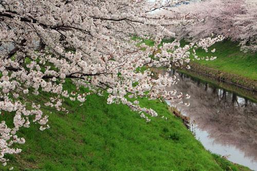 sahogawa04021