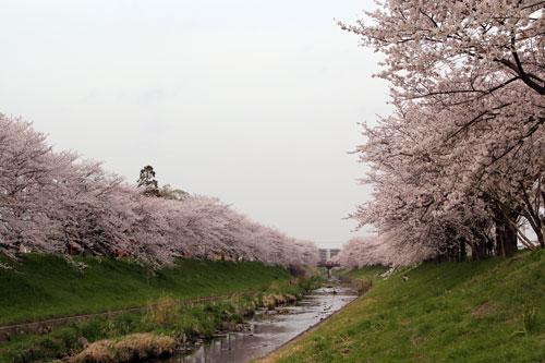 sahogawa1304027