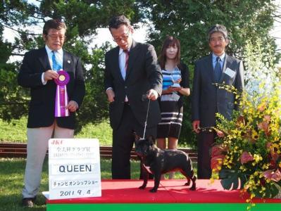 sagiri queen2