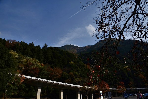 24滝畑DSC_1446