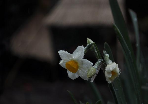 8石光寺DSC_0514