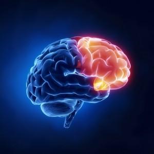 脳のimage