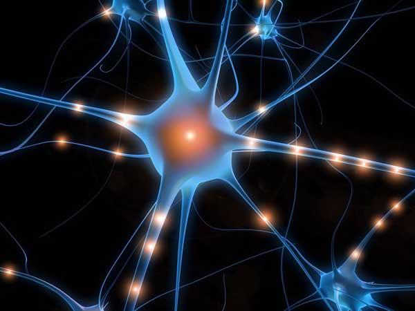 脳のシナプスのimage
