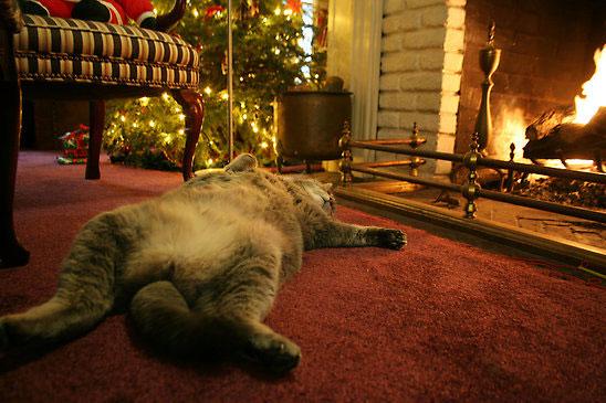 クリスマスの暖炉ネコなimage