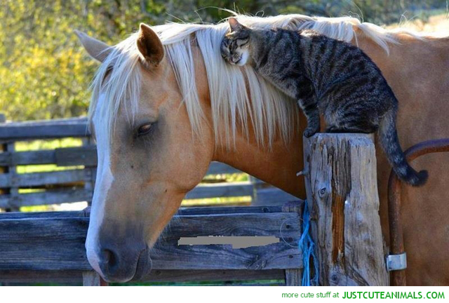 お馬さんと仲良しさんのネコさんimage
