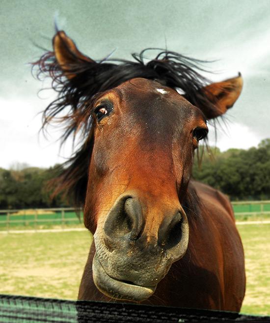 お馬さんお可愛い顔なimage