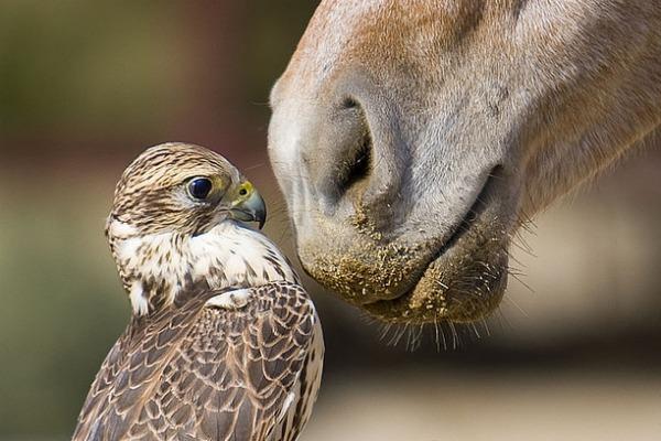お馬さんと鷹さんのimage