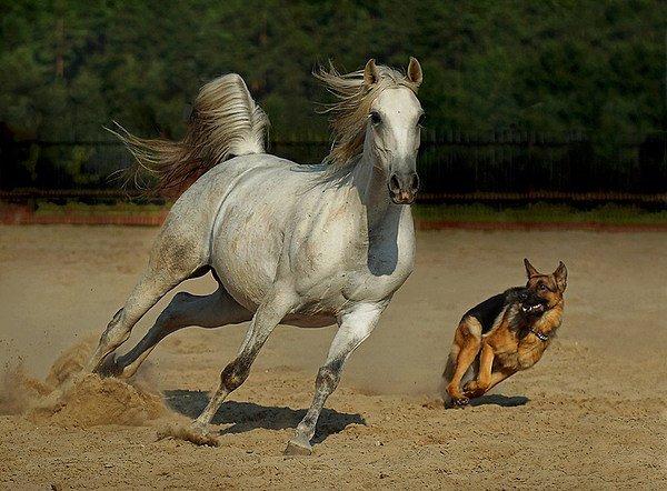 お馬さんとわんころのimage