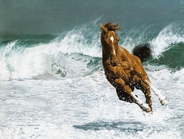 お馬さんのimage