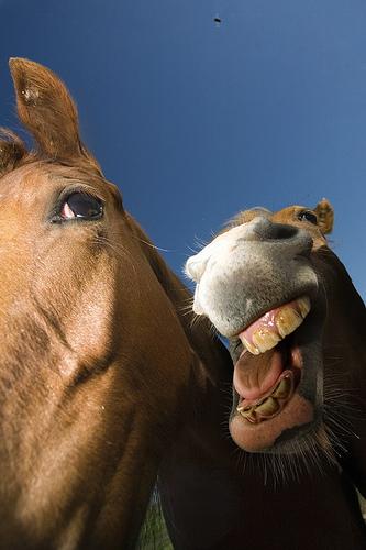 お馬さんの楽しげなimage