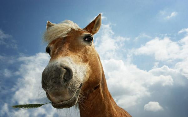 お馬さん近影なimage