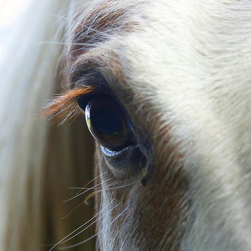 お馬さんの眼なimage
