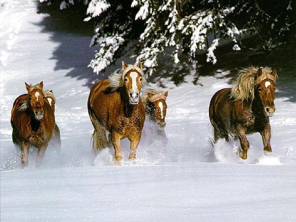 お馬さん雪のなかを行くimage