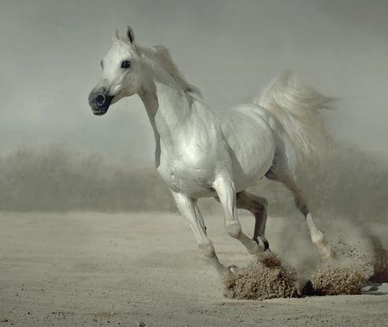 お馬さんが駆けるimage