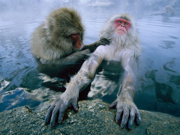 とある日本の温泉とお猿さんなimage