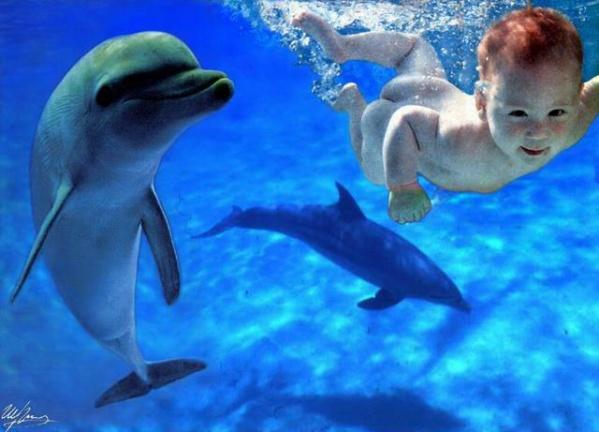 水中の赤ちゃんとイルカのimage