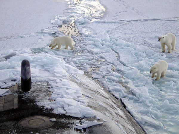 北極クマさんたちのimage