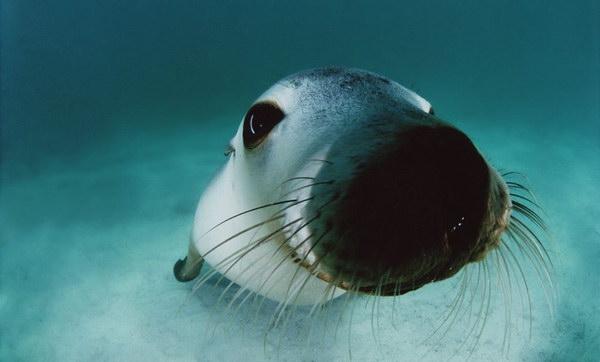 海の生き物(アザラシさん近影)image