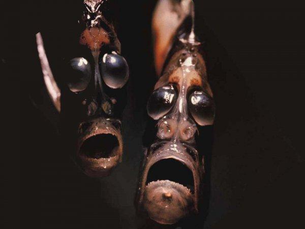 海の生き物(ハチェットフィッシュの亜種)image