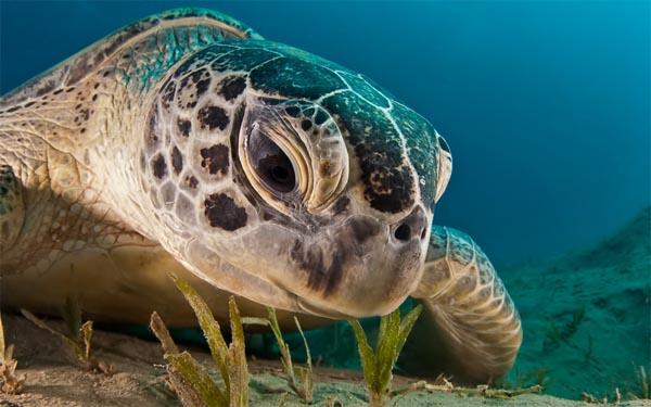 海の生き物(海ガメさんの食事)image