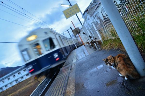 2013年12月19日 上田電鉄別所線 寺下 7200系7253F