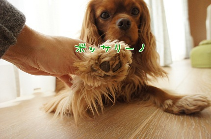 嵐丸 2013.5.2-5