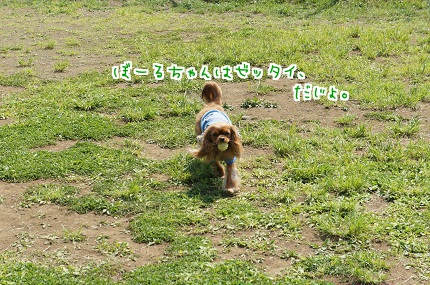 嵐丸 2013.5.4-10