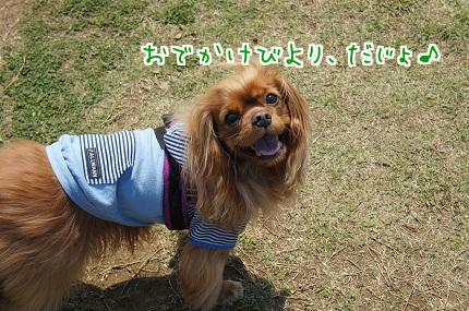 嵐丸 2013.5.4-1