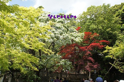 嵐丸 2013.5.4-39