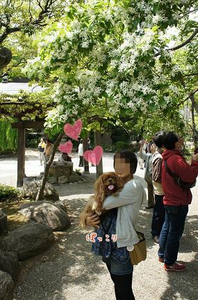 嵐丸 2013.5.4-36