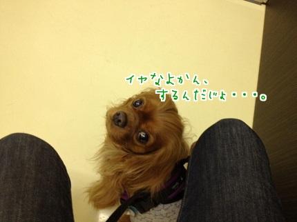 嵐丸 2013.5.7-1