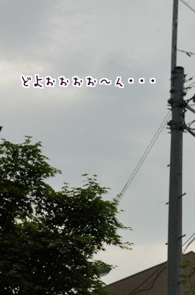 嵐丸 2013.5.16-19