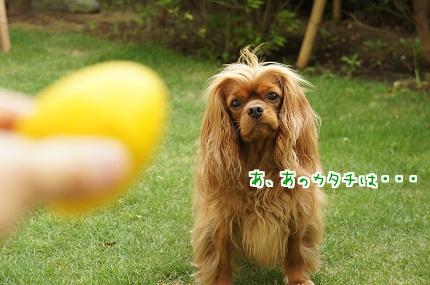 嵐丸 2013.5.16-5