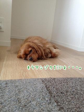 嵐丸 2013.5.19-4