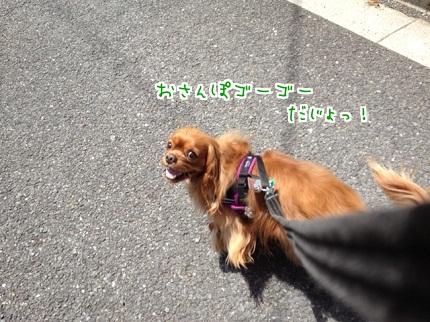 嵐丸 2013.5.19-1