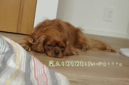 嵐丸 2013.6.14-7