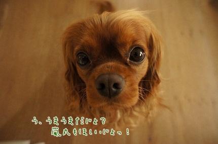 嵐丸 2013.7.15-3