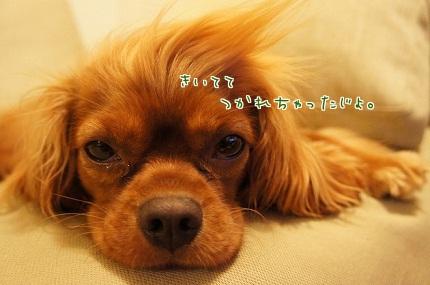 嵐丸 2013.7.15-1