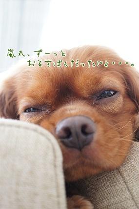 嵐丸 2013.7.16-8