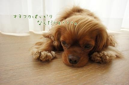 嵐丸 2013.7.17-1