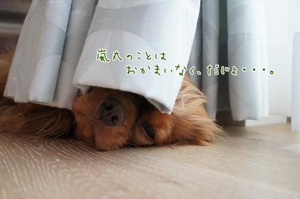 嵐丸 2013.7.18-3
