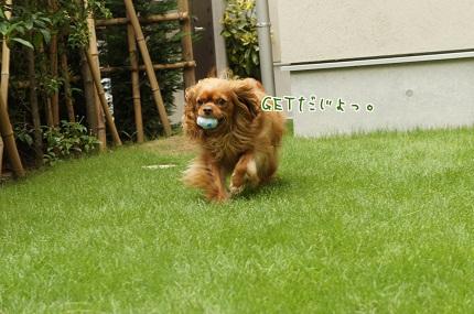 嵐丸 2013.7.23-3