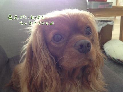 嵐丸 2013.9.7-9