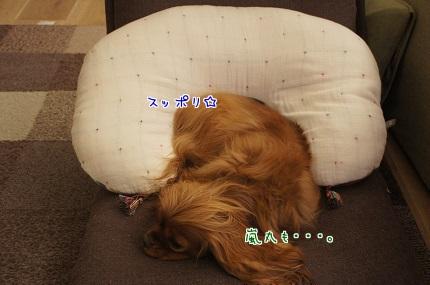 嵐丸 2013.10.6-2