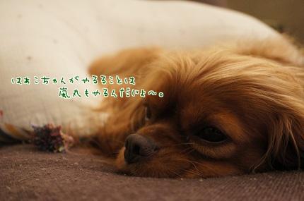 嵐丸 2013.10.6-3