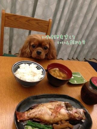 嵐丸 2013.10.8-1